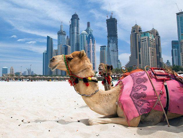خرید سویت در امارات دبی